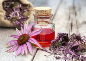Ехинацея – щит срещу есенните вируси