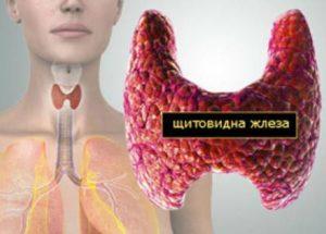 Най-добрите билки за щитовидната жлеза – доказан успех