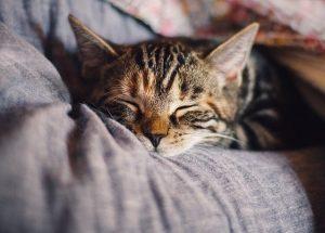 Мисия подобряване на съня: 7 прости стъпки към целта